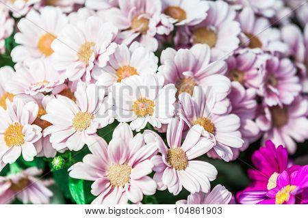 Beautiful flowers in full bloom