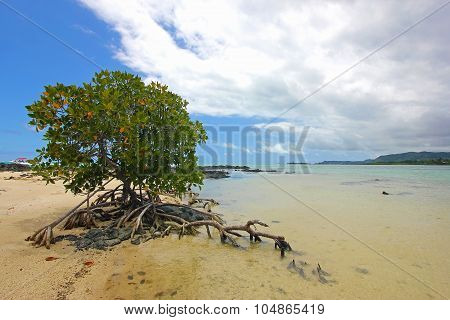 Mangrove Bush In The Water