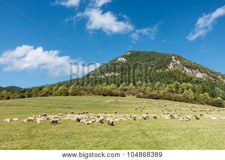Herd Of Grazing Sheeps Under Limestone Hill