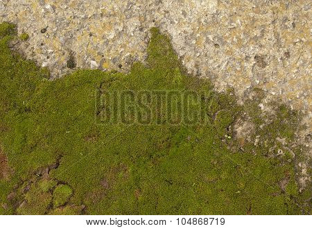 Moss on the stone