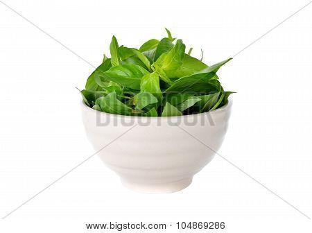 Hairy Basil, Ocimum Basilicum In Bowl On White Background