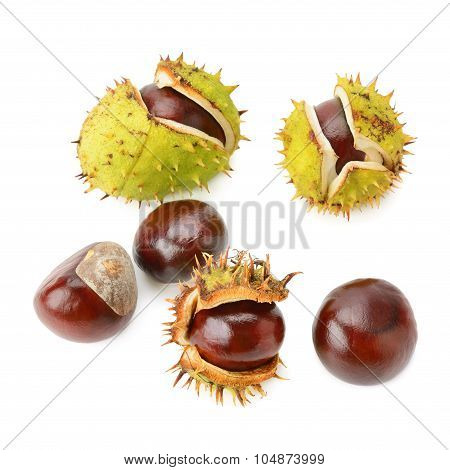 Chestnut Fruits Isolated On White Background