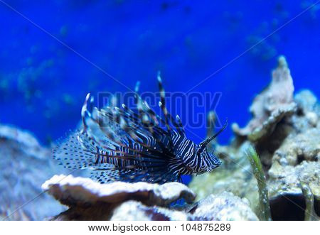 sea urchin in aquarium saltwater world