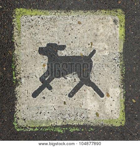 Square Mark Is Prohibited Dog Walking On Asphalt