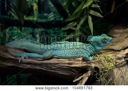 Green Lizard On A Tree Branch.