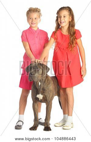 Two beautiful girls joyfully stroking a big dogs head isolated on white. Focus on girl in red dress