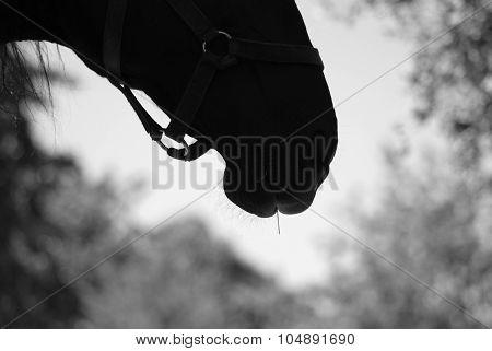 Head Horses