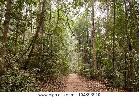 Tropical rainforest wide angle shot