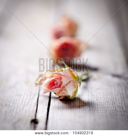 Dried rose buds on a wooden background