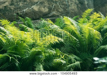 close up shot of the fern thicket