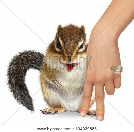 Animal Care Concept, Squirrel Hugs Human Hand