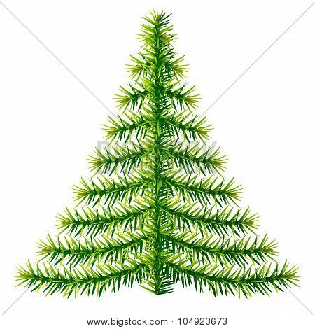 Composition Of Pine Branches In Shape Of Christmas Tree