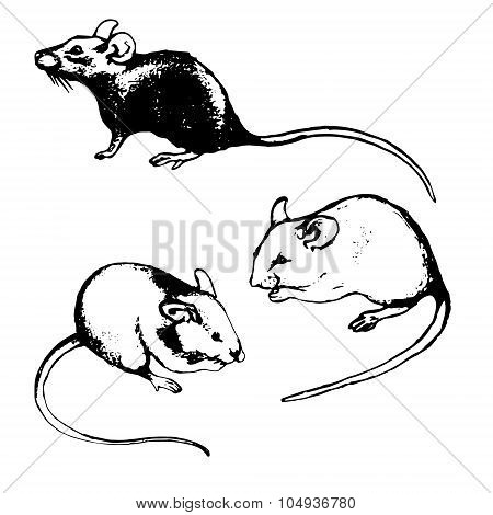 Rats, Mice And Graphic Sketches (set)