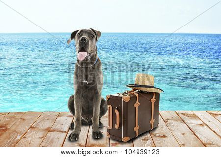 Funny dog tourist with suitcase and hat near sea