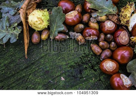 Autumnal Decoration - Acorns, Chestnuts, Buckeye, Oak Leaves On A Wooden Table.