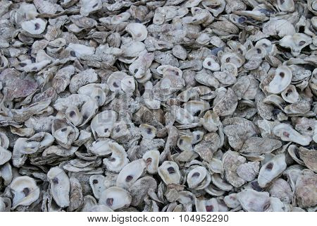 Background of Oyster Shells