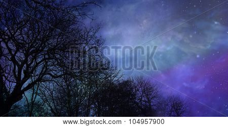 Skeleton trees on a beautiful winter night sky background