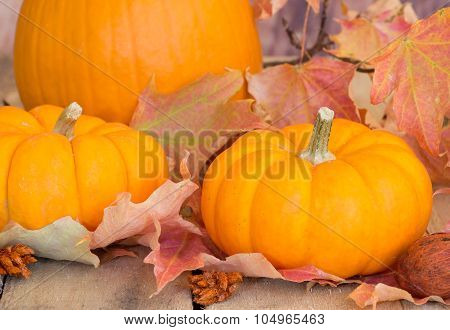 Closeup Of Autumn Pumpkins