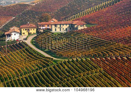 Narrow rural road and houses among colorful autumnal vineyards in Piedmont, Northern Italy.