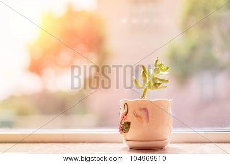 Succulent Pot Decoration At Window Side