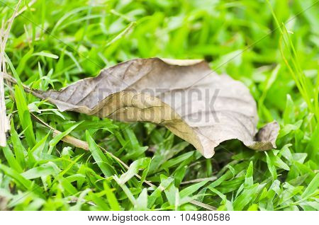 Brown Leaf On The Grass