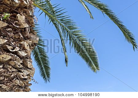 Part Of A Palm Tree Against The Sky