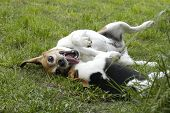 stock photo of molly  - this is mollie and one of her grandchildren wrestling in the backyard - JPG