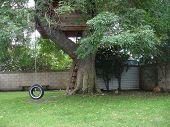 picture of tire swing  - three story tree house with a tire swing and grass area - JPG