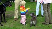 picture of childrenwear  - winner of the third place rosette in a dog show - JPG