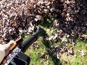 stock photo of leaf-blower  - fall yard work using a leaf blower to pile up fallen dead leaves - JPG