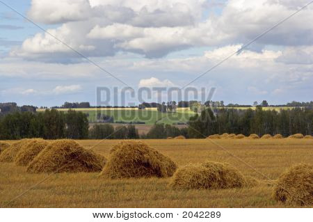 Autamn Landscape