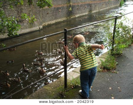 Small Boy Feeding Ducks