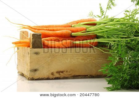 freshly harvested carrots in a wooden crate