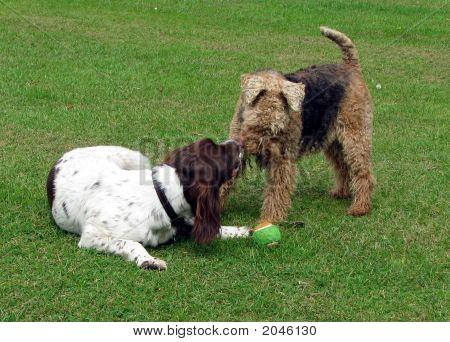Hund Sprache