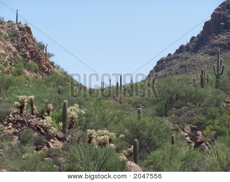 Mountain Gap With Cactus