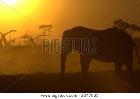 Elephant Silhouette At Sunrise