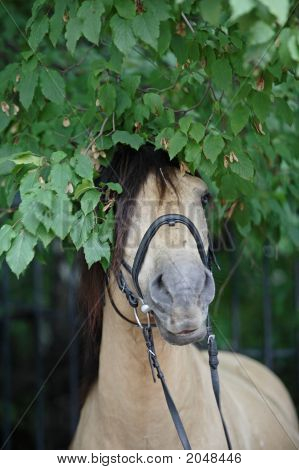 The Horse Vyatskaja Breeds In Russian Forest