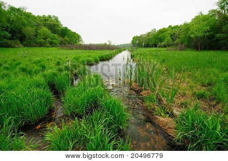 Green Wetlands In The Spring