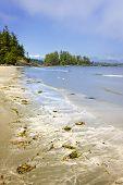 foto of pacific rim  - Long Beach in Pacific Rim National park Vancouver Island Canada - JPG