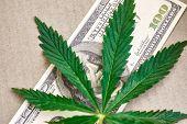 Sheet Of Marijuana. Money With Marijuana Leaves Close. Hemp With Money. Marijuana Leaves On A Stack poster