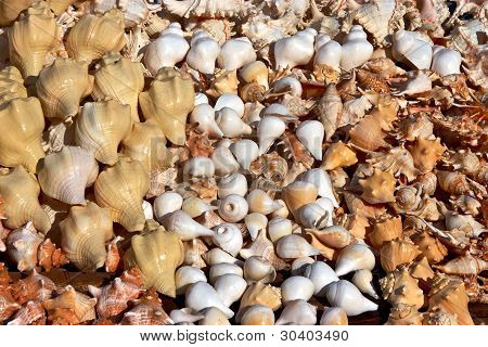 Collections Of White And Yellow Sea Shells