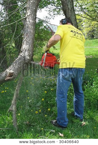 Man trimming dead branch with a chainsaw