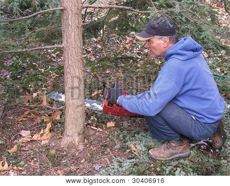 Man cutting hemlock tree