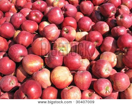 Heap of red delicious apples