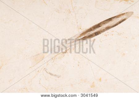 Marine Fossil