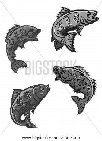 Perch, Carp And Bass Fish
