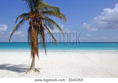 Tulum Beach With Coconut Palm