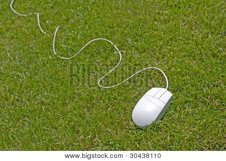 The grey mouse from a computer lays on a lawn.