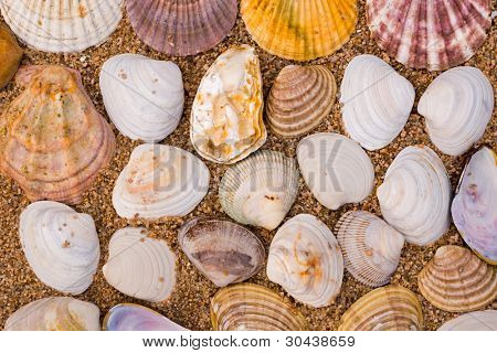 Sea shells on sea sand.