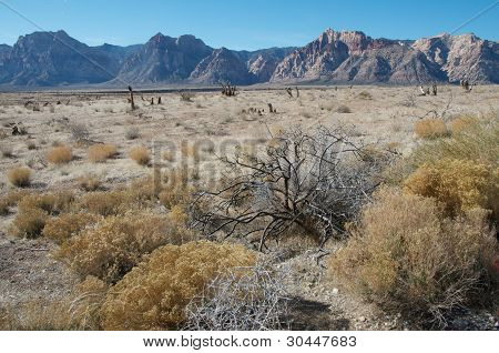 Arid Arizona Landscape